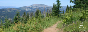 Summer shot of Elk Trail with Granite Mountain in background