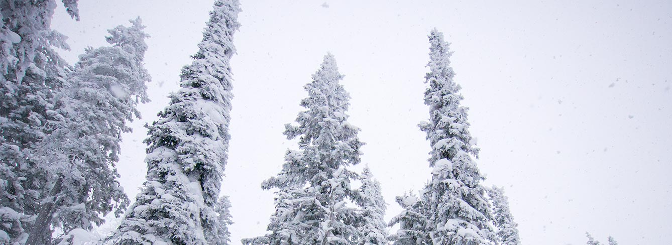The New Brundage App Puts Winter in the Palm of Your Hand