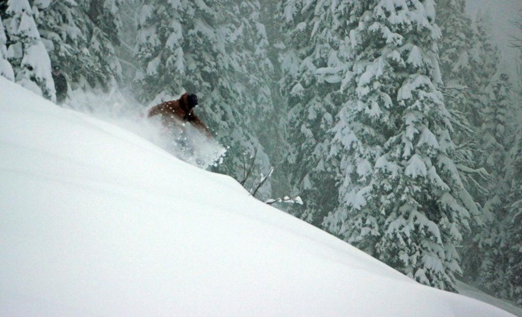 powder tree skiers