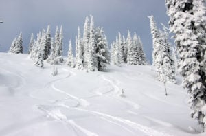 ski tracks in powder