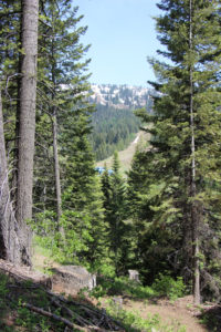 view of Alpine Ski Run from nature trail