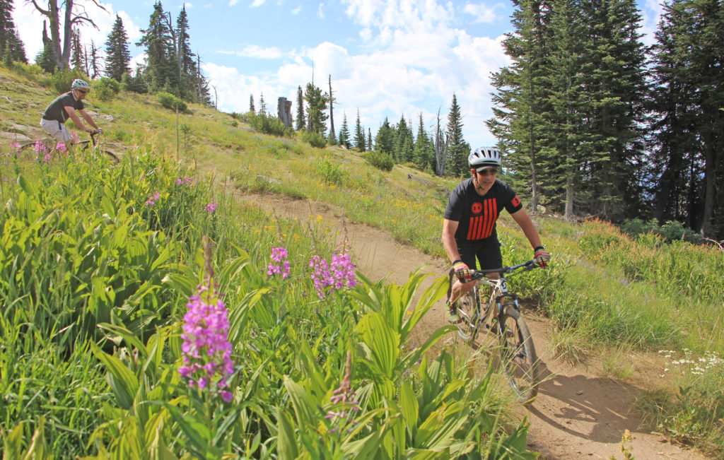 Two Young Men Mountain Biking near Wildflowers