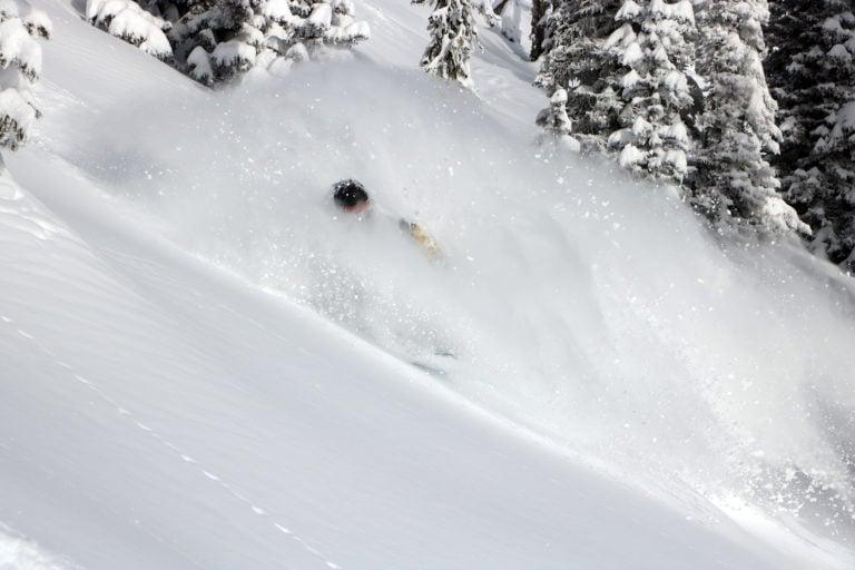 Powder skier in trees