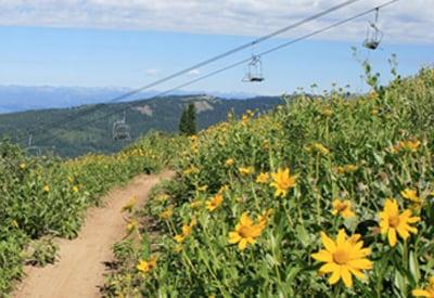 Wildflowers next to Mountain Bike Trail